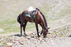Brown-Pferd, das Gras auf den Felsen isst Stockfoto