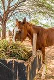Brown-Pferd, das Heustroh, Gras isst stockbild