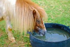 Brown-Pferd, das im Bauernhof isst und weiden lässt Stockfoto