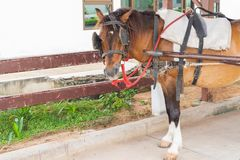 Brown-Pferd, das im Bauernhof steht Lizenzfreie Stockfotos