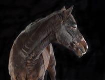 Brown-Pferd, das zur Seite schaut stockfotografie