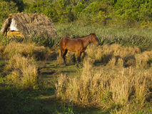 Brown-Pferd an den ersten Lichtern des Morgens Lizenzfreie Stockfotografie