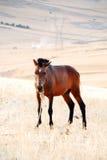 Brown-Pferd in einem Bauernhof Stockbild