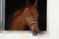 Brown-Pferd in einem Stall Lizenzfreie Stockbilder