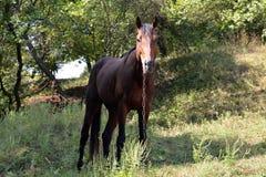 Brown-Pferd in einer Schlucht auf der Kette Stockbilder