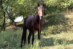 Brown-Pferd in einer Schlucht auf der Kette Lizenzfreie Stockfotografie