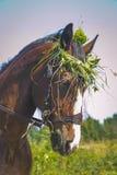 Brown-Pferd im Kranz Lizenzfreies Stockfoto