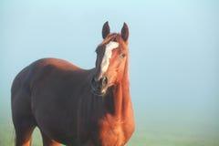 Brown-Pferd im Morgensonnenlicht Lizenzfreies Stockbild
