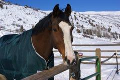 Brown-Pferd mit blauer Decke Lizenzfreie Stockbilder