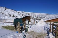 Brown-Pferd mit blauer Decke Lizenzfreie Stockfotografie