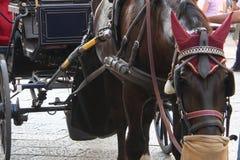 Brown-Pferd mit einem Wagen stockbilder