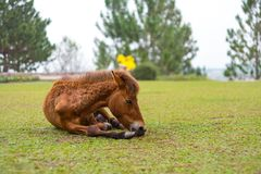 Brown-Pferd mit Gebirgshintergrund stockbild