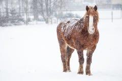 Brown-Pferd, welches oben steht und die Kamera betrachtet Stockfoto