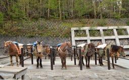Brown-Pferde in einem Stall Lizenzfreies Stockfoto