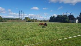 Brown-Pferde im Land stockfoto