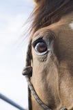 Brown-Pferdeauge und -himmel lizenzfreies stockbild