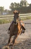 Brown-Pferdebetrieb Lizenzfreie Stockbilder