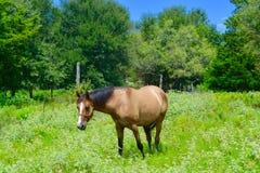 Brown-Pferdeessen Lizenzfreie Stockbilder