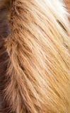 Brown-Pferdemähne Lizenzfreie Stockfotografie
