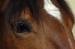 Brown-Pferdenaugennahaufnahme Lizenzfreie Stockbilder