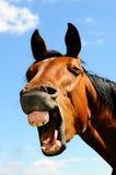 Brown-Pferdenkopf Stockfoto