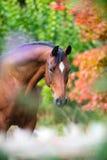 Brown-Pferdeportrait auf buntem Naturhintergrund Lizenzfreies Stockfoto