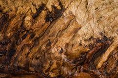 Brown piękny sedno drzewny popiół w cięciu, zbliżenie, tekstura zdjęcie royalty free