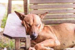 Brown pies zdjęcia stock