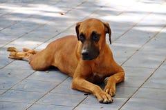 Brown pies Zdjęcie Royalty Free