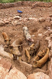 Brown pigs in stone walled corral Stock Image