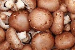 Brown-Pilze Stockfotografie