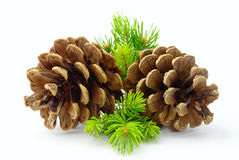 Brown Pine Cone And Green Line Stock Photos