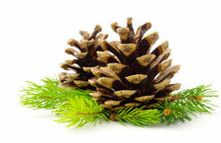 Brown Pine Cone And Green Line Stock Image