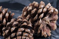 Brown pine cone with black cloth. Three brown pine cone with black cloth Royalty Free Stock Photo