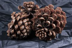 Brown pine cone with black cloth. Three brown pine cone with black cloth Stock Images