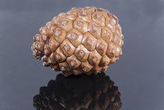 Brown pine cone black glossy. Center Stock Photos