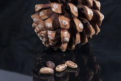 Brown pine cone with black cloth glossy black isolated. Brown pine cone with four pine nuts black glossy isolated Stock Photos