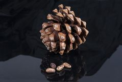 Brown pine cone with black cloth glossy black isolated. Brown pine cone with four pine nuts black glossy isolated Stock Photography