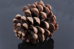 Brown pine cone  glossy black isolated. Brown pine cone glossy black isolated center Stock Photo