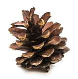 Brown pine cone isolated on a white background.  Royalty Free Stock Photo