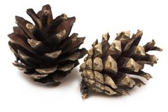 Brown pine cone isolated on a white background.  Stock Image