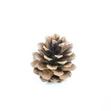 Brown pine cone isolated Royalty Free Stock Photography