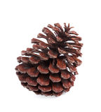 Brown pine cone isolated on white background Stock Photos