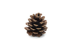Brown pine cone isolated on white background Stock Images
