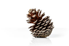 Brown pine cone isolated on white background. With reflection Royalty Free Stock Images
