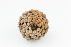 Brown pine cone isolated white background Stock Image