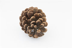 Brown pine cone isolated white background Stock Photo