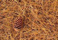 Brown Pine Cone Stock Photo