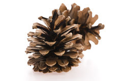 Brown pine cone Stock Image