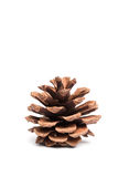 Brown pine cone Royalty Free Stock Photos